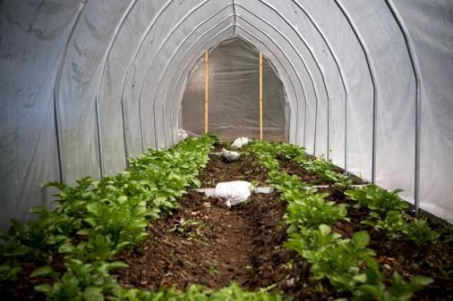 20120503_good_farm_004