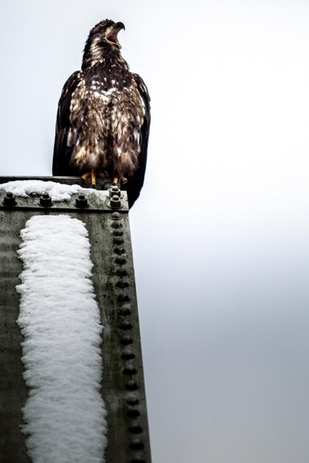 20121224_eagle_rndm_023